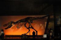 ティラノサウルスの「スーちゃん」